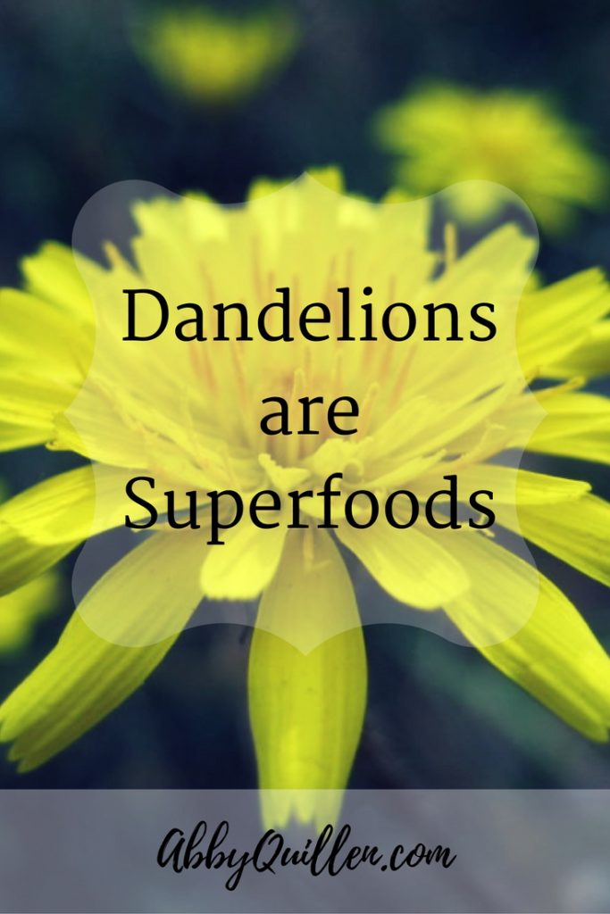 Dandelions are Superfoods #superfoods #foraging #health