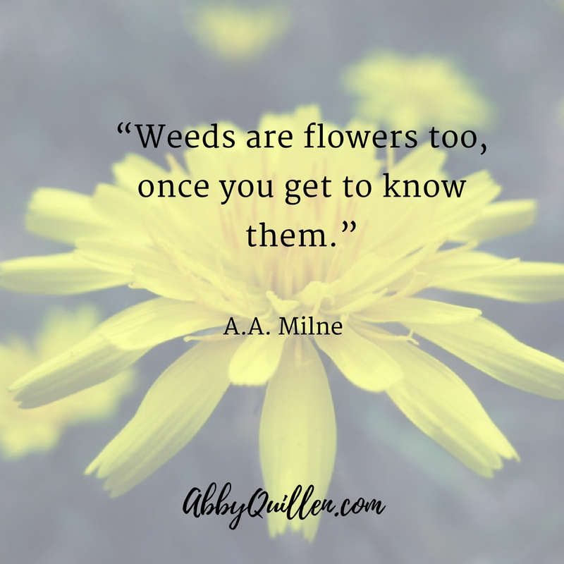 Weeds are flowers too, once you get to know them. A.A. Milne #dandelions #wildfoods #foraging