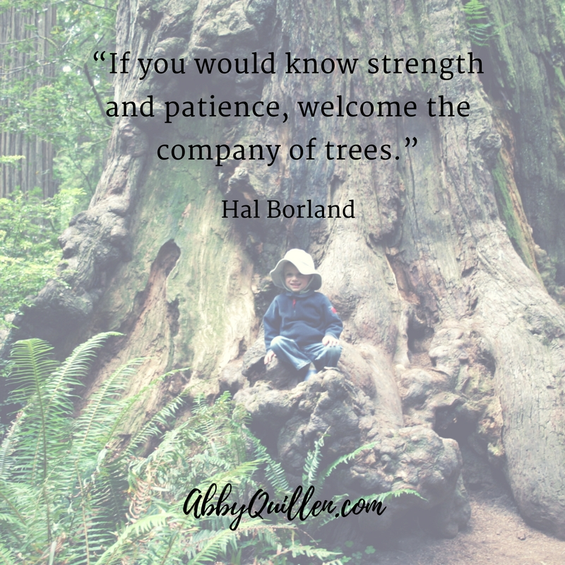 """If you would know strength and patience, welcome the company of trees."" - Hal Borland"