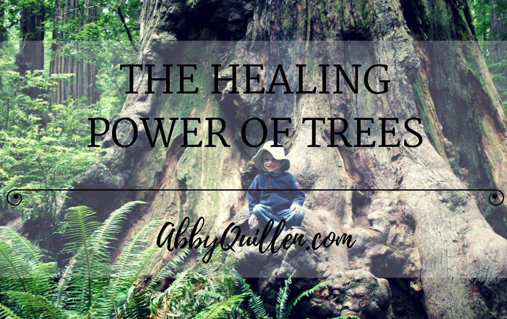 The Healing Power of Trees