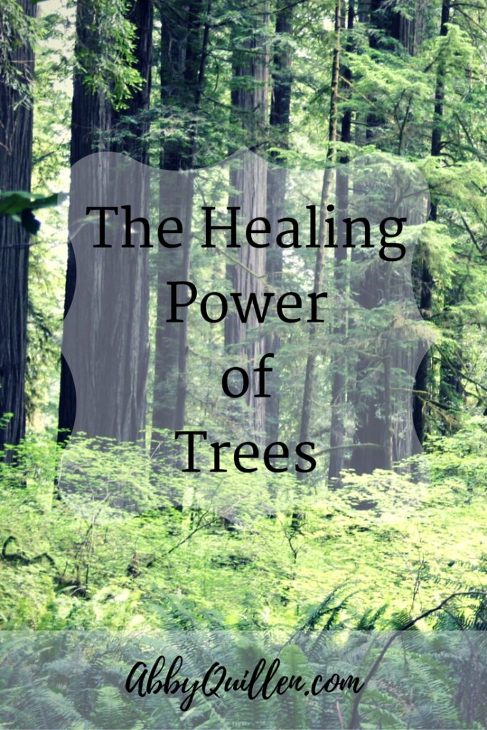 The Healing Power of Trees #health #naturalremedies #plantmedicine