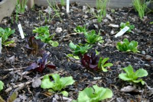 March Seeds Bring April Greens