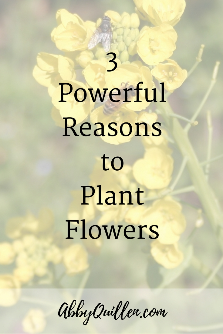 3 Powerful Reasons to Plant Flowers #gardening
