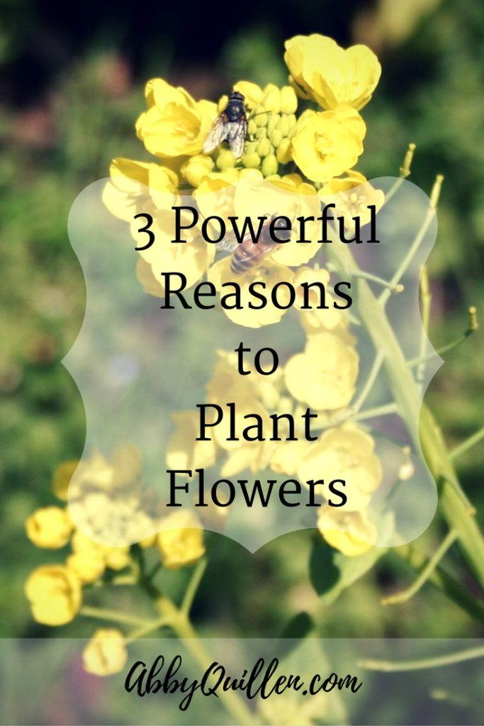 3 Powerful Reasons to Plant Flowers