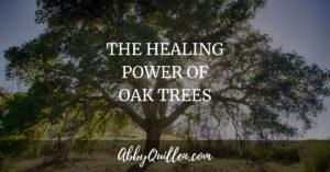 The Healing Power of Oak Trees